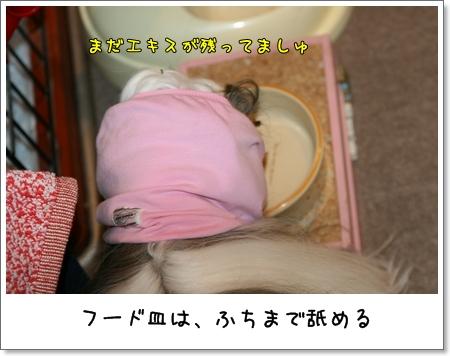 2008_1129_204204AA.jpg