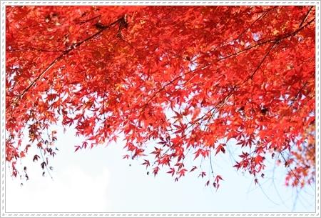 2008_1130_140533AA.jpg