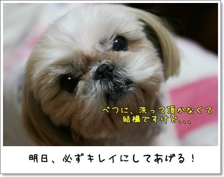 2008_1202_193213AA.jpg