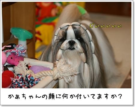2008_1204_073742AA.jpg