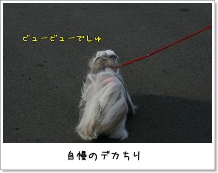 2008_1207_133201AA.jpg