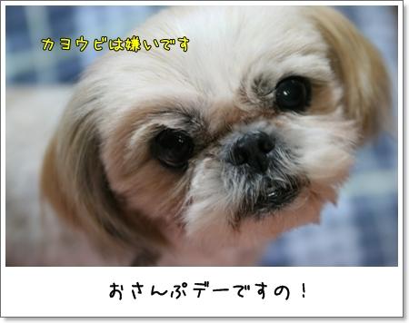2008_1216_191016AA.jpg