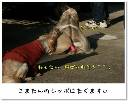 2008_1221_135359AA.jpg