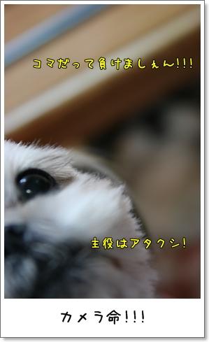 2008_1224_185844AA.jpg