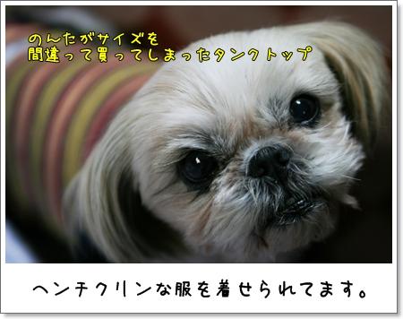 2008_1225_194144AA.jpg