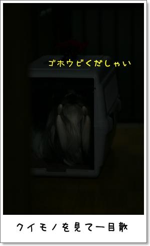 2008_1225_194231AA.jpg