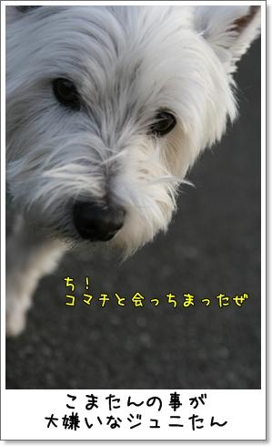 2008_1230_154637AA.jpg