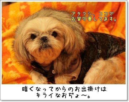 2009_0110_165242AA.jpg
