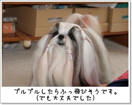 2009_0112_130355AA.jpg