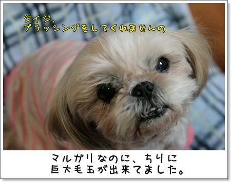 2009_0115_191524AA.jpg