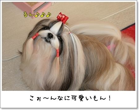 2009_0117_153825AA.jpg