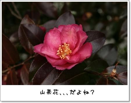 2009_0118_143729AA.jpg
