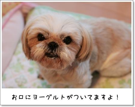 2009_0125_070619AA.jpg