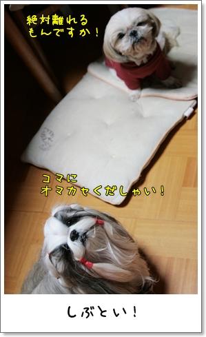 2009_0125_171154AA.jpg