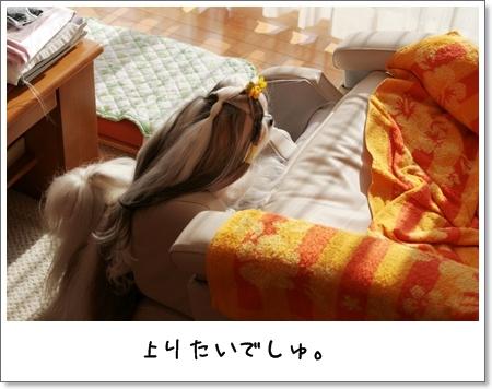 2009_0126_134205AA.jpg