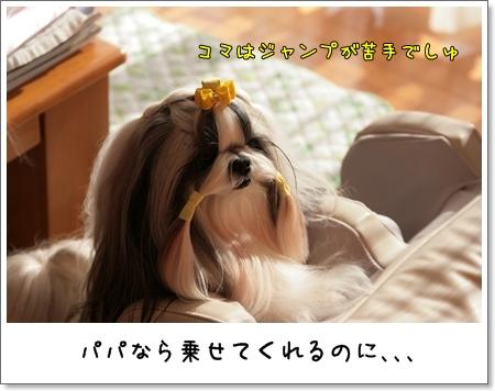 2009_0126_134211AA.jpg