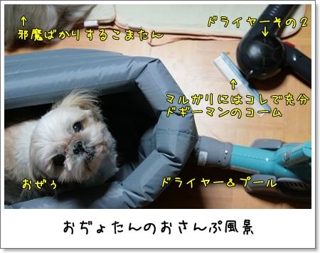 2009_0127_190142AA.jpg
