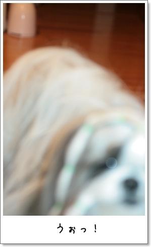 2009_0130_073601AB.jpg