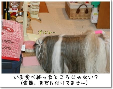 2009_0201_080145AA.jpg