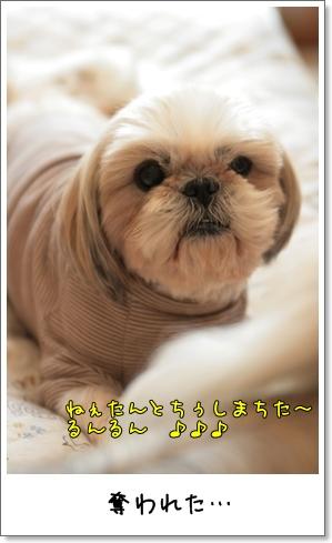 2009_0201_115111AA.jpg