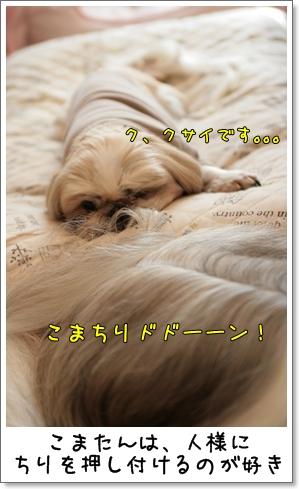 2009_0201_115341AA.jpg