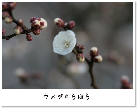 2009_0201_160514AA.jpg