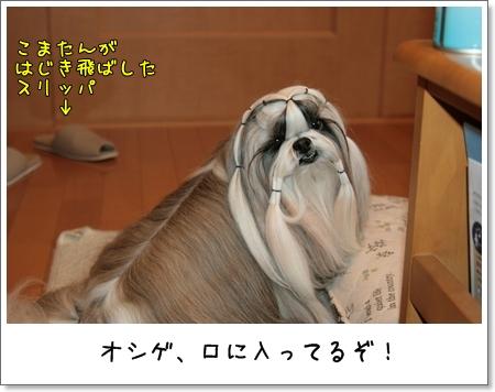 2009_0205_074028AA.jpg