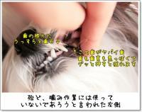 2009_0221_092537AA.jpg