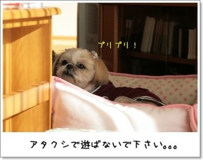 2009_0221_145702AA.jpg