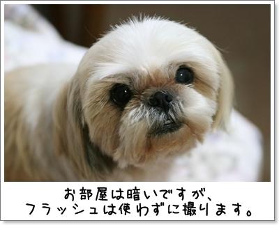 2009_0617_194737AA.jpg