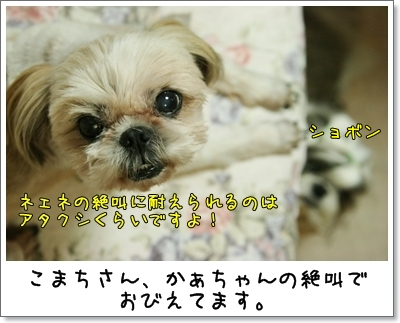 2009_0625_191219AA.jpg
