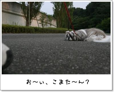 2009_0705_181134AA.jpg