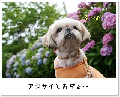 2009_0705_181413AA.jpg