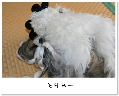 2009_0708_074116AA.jpg