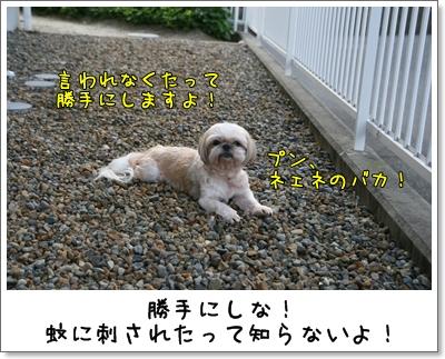 2009_0815_170614AA.jpg