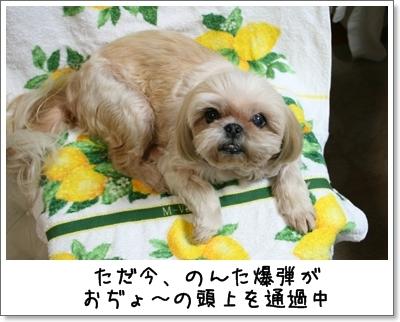 2009_0818_183305AA.jpg
