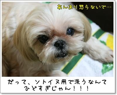 2009_0818_183416AA.jpg