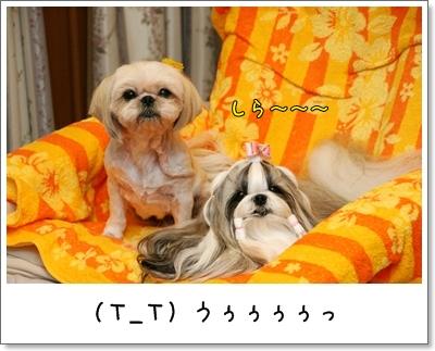 2009_0822_191932AA.jpg