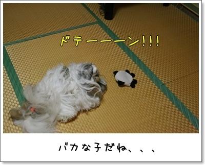 2009_0826_203102AA.jpg
