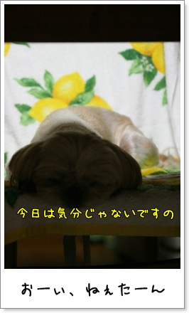 2009_0827_192047AA.jpg