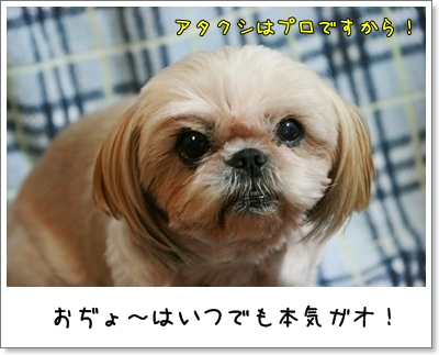 2009_0908_194012AA.jpg