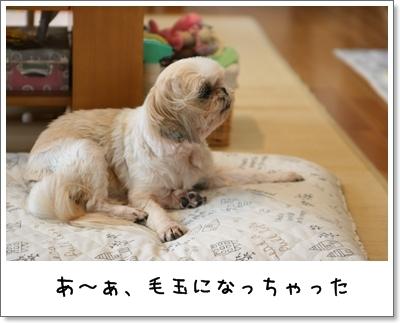 2009_0927_100657AA.jpg