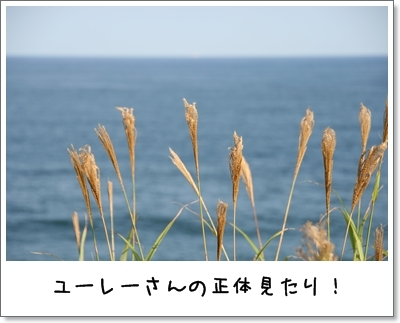2009_1004_150560.jpg