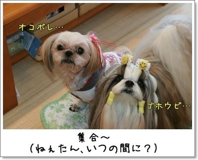 2009_1011_075532AA.jpg