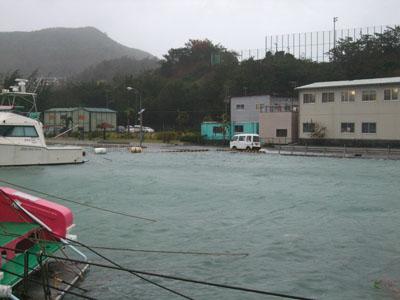 トビウオ高潮0919