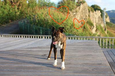 ウェザー犬1014