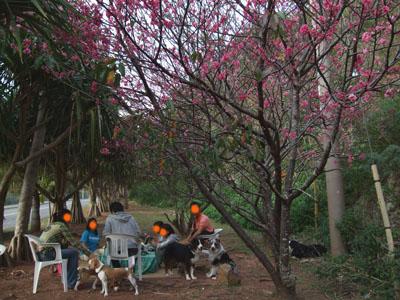 桜花見0216