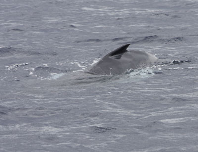 子クジラ0220