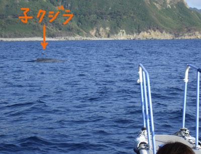 子クジラ0305
