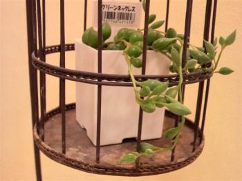 なかなか面白い植物です